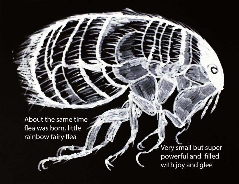 Rainbow fairy flea was born