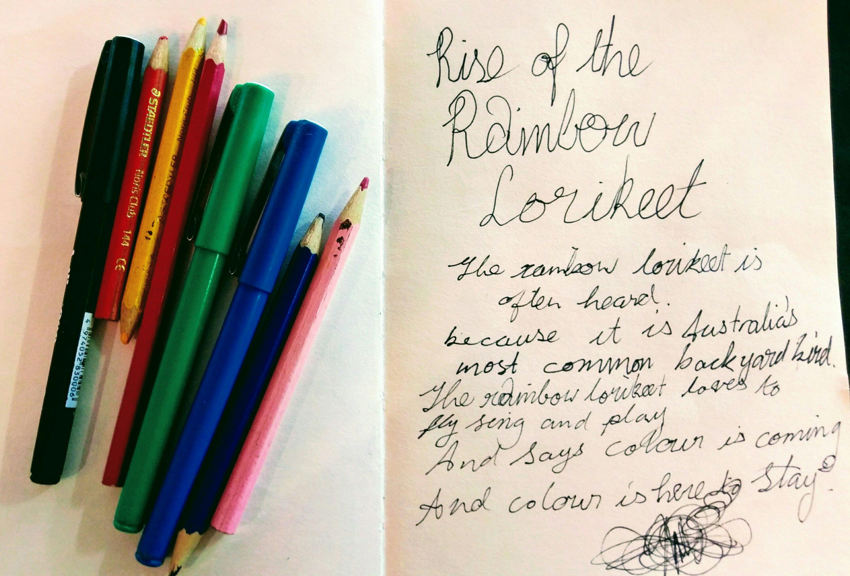 Rainbow lorikeet drawing