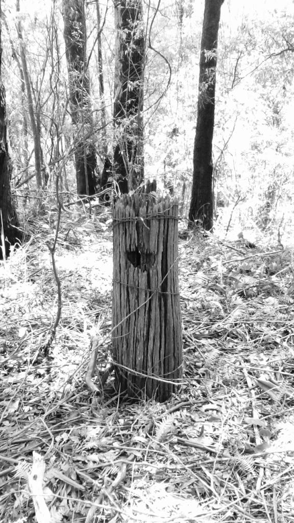 Weathered grey fence post